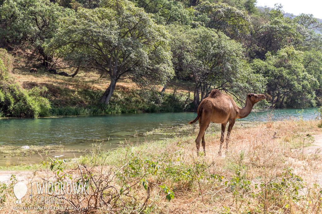 Dolina Wadi Darbat, czyli wiecznie zielony Oman