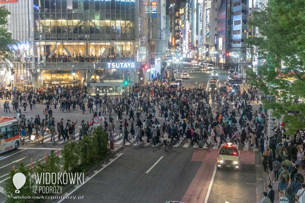 Shibuya i Hachiko, czyli co ty wiesz o wierności