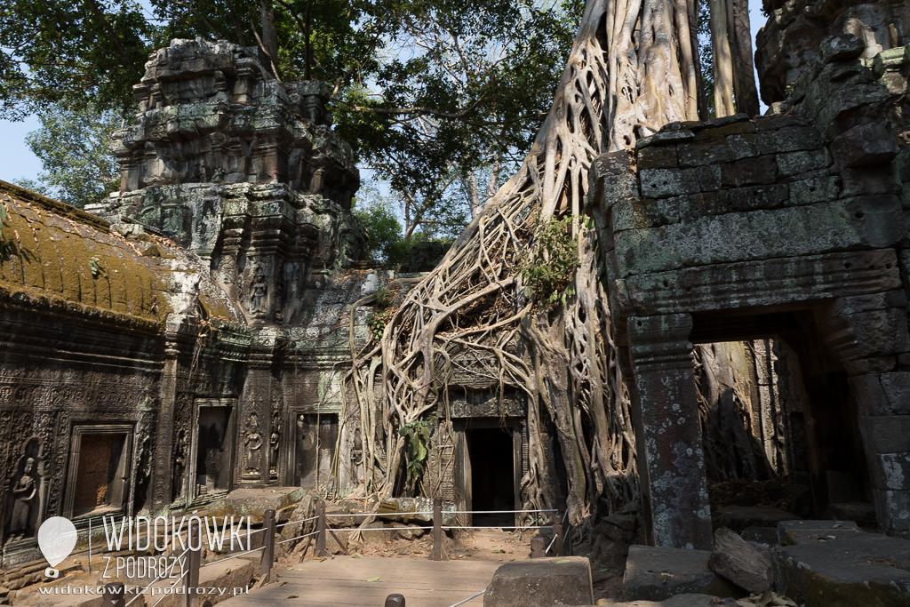 Ta Prohm, czyli Lara Croft w Kambodży