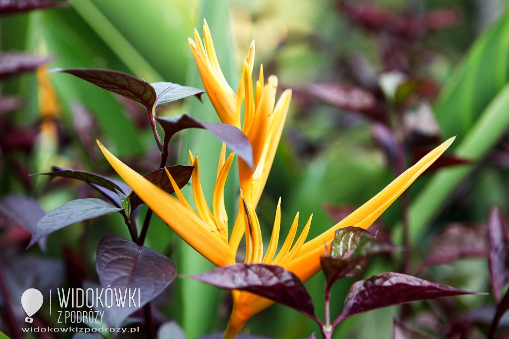 Wszędzie kwitną kwiaty, czyli Pierwszy Dzień Wiosny