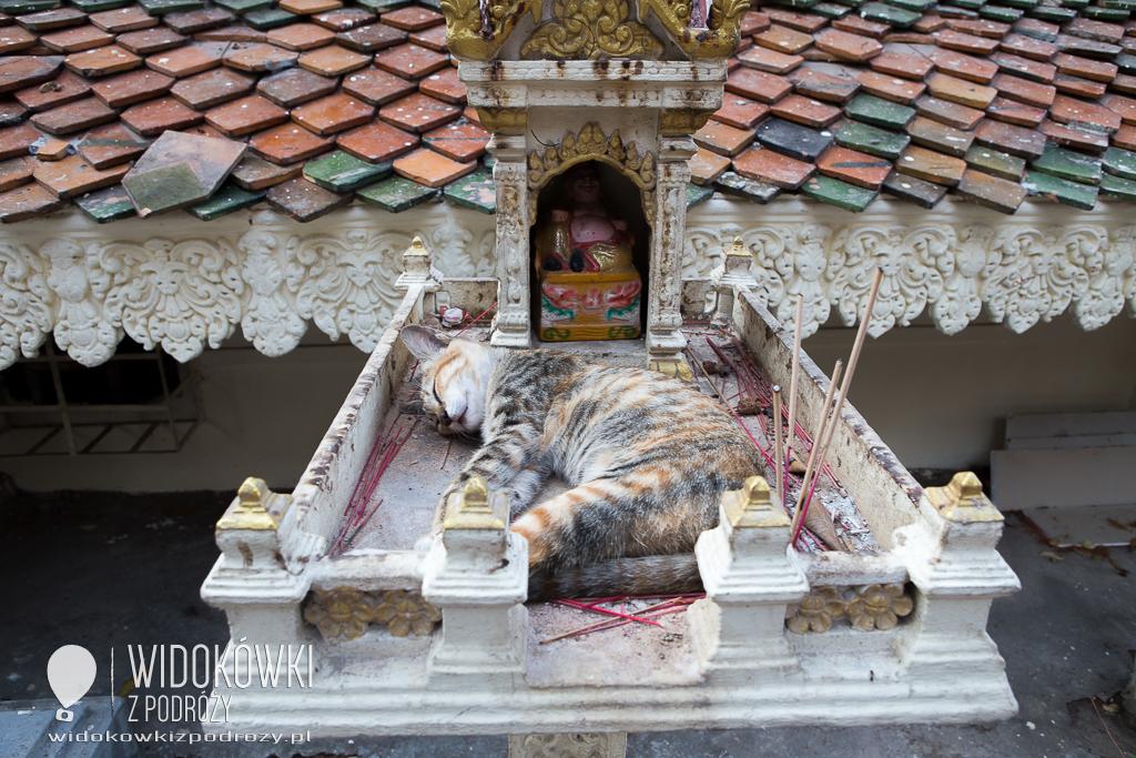 Budda, lotos, płatki złota i trociczki, czyli co można robić w tajskim Wat