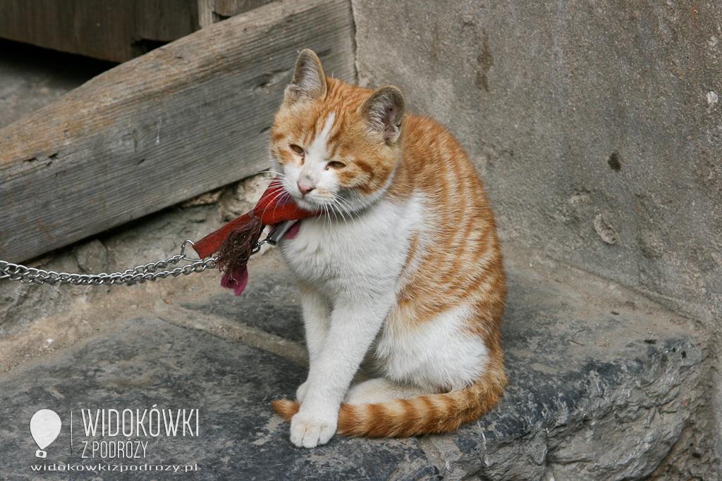 Kot jaki jest, każdy widzi, czyli 17 lutego: Światowy Dzień Kota