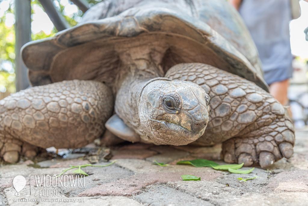 Olbrzymie żółwie w więzieniu, czyli Prison Island na Zanzibarze