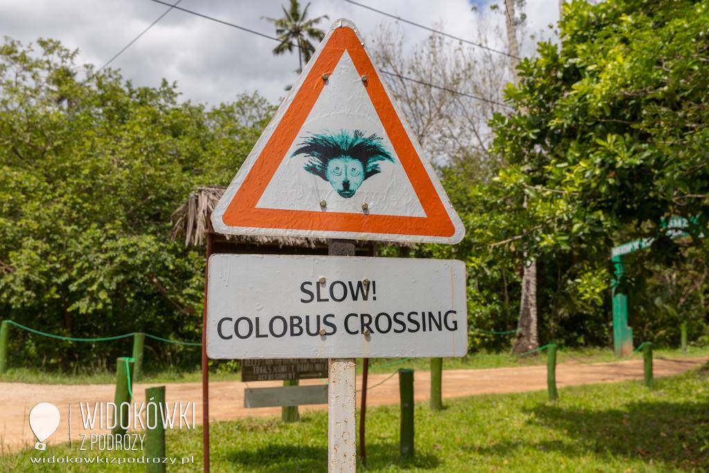 Uwaga: colobusy na drodze, czyli Jozani Forest na Zanzibarze